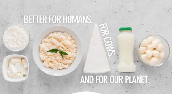 Remilk, société laitière sans animaux, obtient 11,3 millions de dollars en préparation de son lancement mondial