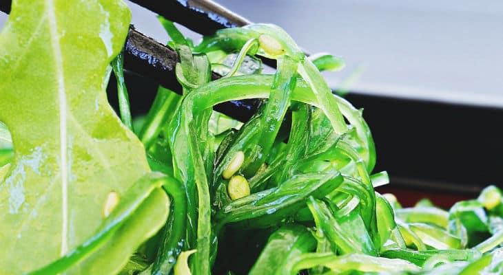 Vinpai Food fait le choix de l'alliance algues marines et fibres végétales comme ingrédients naturels du futur