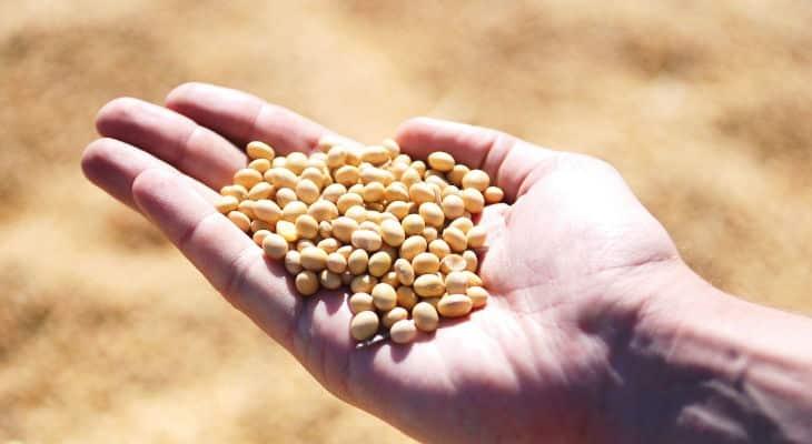 Avril obtient un prêt de 50 millions d'euros pour anticiper la croissance du marché des protéines végétales