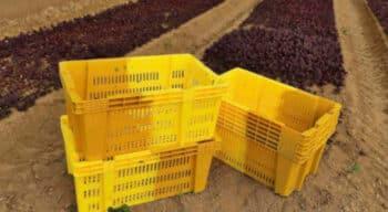 Emballage : Picvert passe au transport plus vert de ses salades