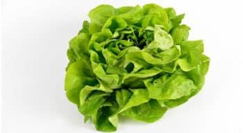 Fruits et légumes frais prêts à l'emploi : Le SVFPE constate une hausse généralisée des coûts de production