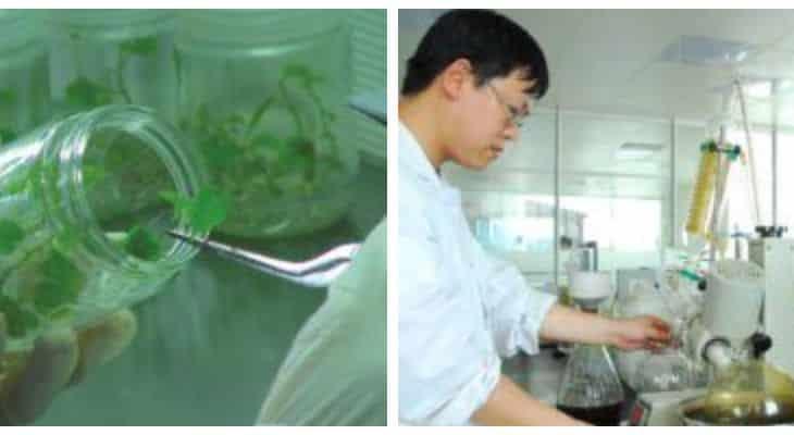 Layn veut traiter 4000 tonnes supplémentaires d'extrait de feuille de stévia par an