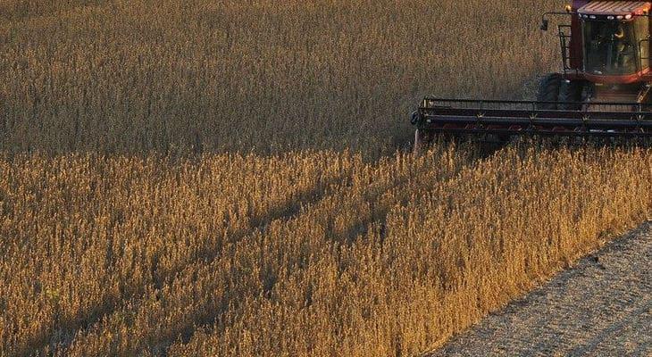 Nutrition animale : Maïsadour et Vivadour annoncent la création d'une filière soja 100% Sud-Ouest