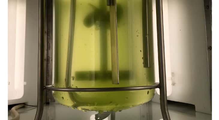 La gamme d'huiles d'algues de Fermentalg sur le marché de la nutrition infantile