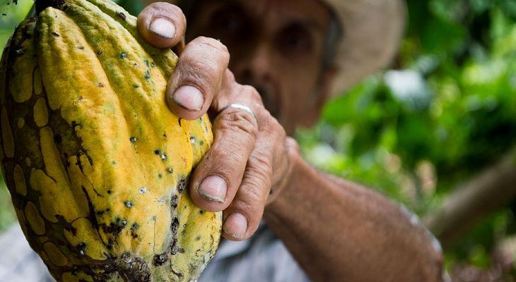 Les entreprises de la filière cacao-chocolat signent pour la production d'un cacao durable et d'excellence